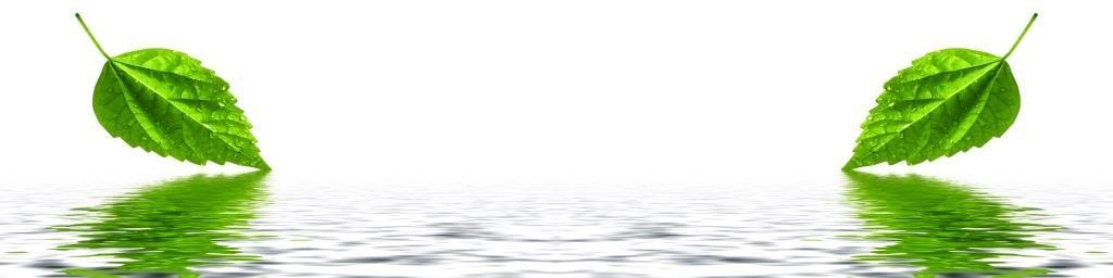 Fototapeta_odsev listi v vodi
