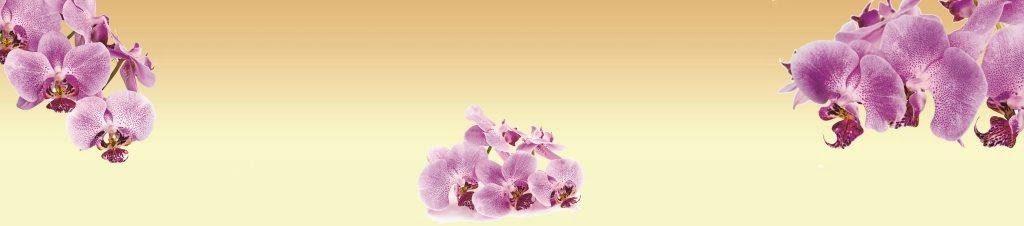 Fototapeta_orhideje