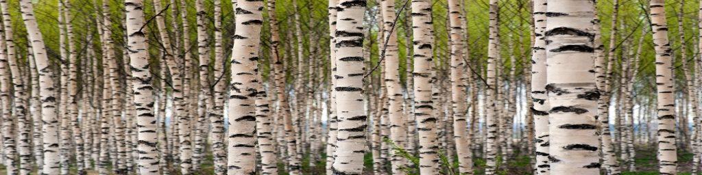 fototapeta-breze