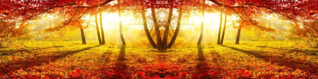 fototapeta-jesen