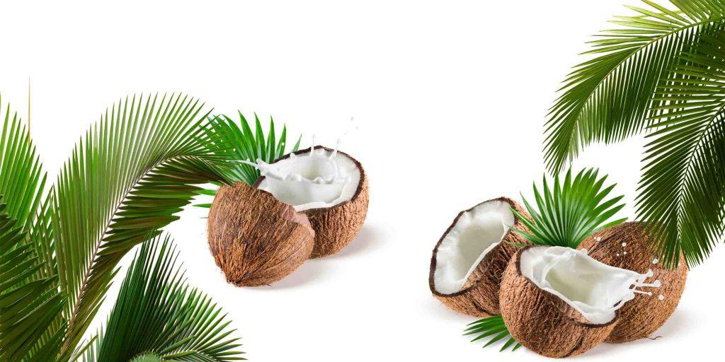 fototapeta kokos